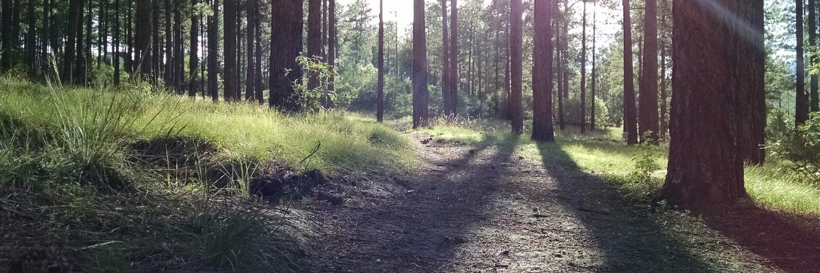 Path through Woods toward Sunlight