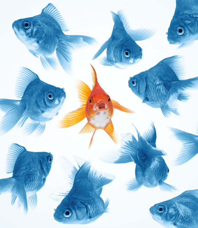 A gold fish in a school of blue fish represents how Dr. Melonni Dooley is unique